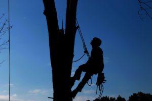 Abattage élagage arbre secteur Méru